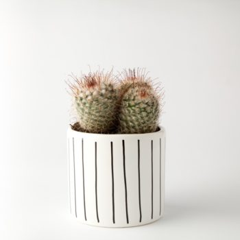 , SMALL FLOWER POT | STRIPED - 304 2026613067 350x350