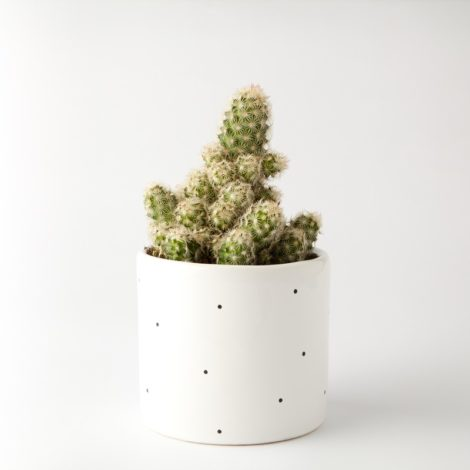 , SMALL FLOWER POT | DOTTED - 304 7848963439 1 470x470
