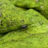 wohntextilien, wohnen, hochzeitsgeschenke, greenery, bettwaesche, HAYKA MOOS BETTWÄSCHE - mech detal metka 100x100