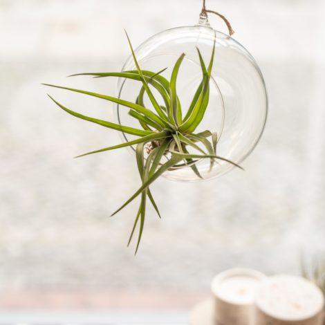 vasen, wohnen, glas, GLASKUGEL L - QY1C8080 470x470