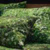 wohntextilien, wohnen, kissen-und-kissenbezuege, HAYKA ALPENWIESE KISSENBEZUG - Alpine Meadow pillows 2 100x100
