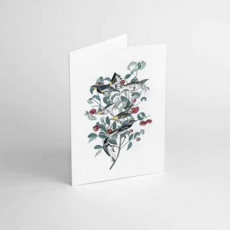 , GREETING CARD J.J. AUDUBON I - JJ 1 470x470