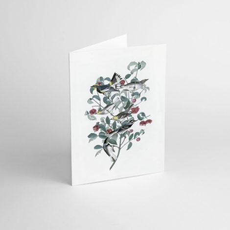 postkarten-und-grusskarten, papierartikel, GRUßKARTE J.J. AUDUBON I - JJ 1 e1539189908989 470x470
