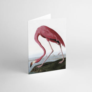 , GREETING CARD J.J. AUDUBON IV - JJ 3 350x350