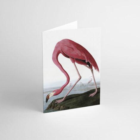 postkarten-und-grusskarten, papierartikel, GRUßKARTE J.J. AUDUBON IV - JJ 3 e1539189955849 470x470