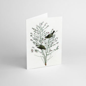 , GREETING CARD J.J. AUDUBON II - JJ 4 350x350