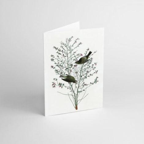 postkarten-und-grusskarten, papierartikel, GRUßKARTE J.J. AUDUBON II - JJ 4 e1539189971880 470x470