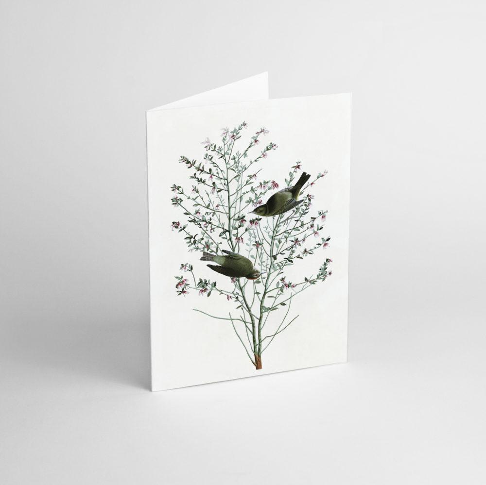 postkarten-und-grusskarten, papierartikel, GRUßKARTE J.J. AUDUBON I - JJ 4 e1539189971880