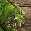 wohntextilien, wohnen, decken-und-ueberwuerfe, TAGESDECKE MOOS - big hayka moss 8 150dpi 100x100