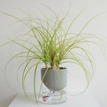 home-accessories, interior-design, flower-pots, FLOWER POT KAPI SLEEK SMALL - Kapi DB plant 05 1000x6673 350x350