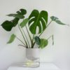 home-accessories, interior-design, flower-pots, FLOWER POT KAPI PEBBLE BIG - Kapi DJ plant 05 1000x667 100x100