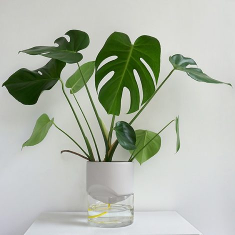 home-accessories, interior-design, flower-pots, FLOWER POT KAPI PEBBLE BIG - Kapi DJ plant 05 1000x667 470x470