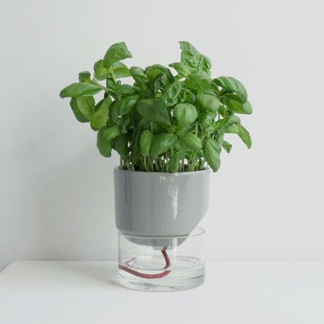 home-accessories, interior-design, flower-pots, FLOWER POT KAPI SLEEK SMALL - Kapi MB plant 01 1000x667 470x470
