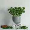home-accessories, interior-design, flower-pots, FLOWER POT KAPI SLEEK SMALL - Kapi MB plant 03 1000x667 100x100
