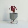home-accessories, interior-design, flower-pots, FLOWER POT KAPI SLEEK SMALL - Kapi MB plant 04 1000x667 100x100