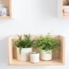 home-accessories, interior-design, flower-pots, FLOWER POT CINNAMON 3000 - QY1C8607 100x100