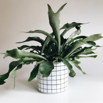 interior-design, home-accessories, flower-pots, FLOWER POT CHECKED 19CM - kratka19 350x350
