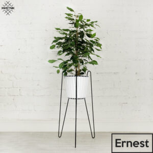, KWIETNIK_ERNEST - KWIETNIK ERNEST 300x300
