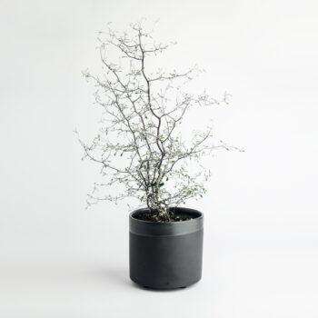 interior-design, home-accessories, flower-pots, FLOWER POT ALL BLACK 1500 - 1500 BLACK W01   1 350x350