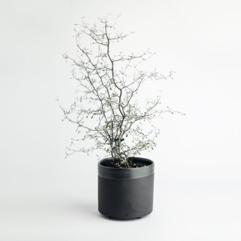 home-accessories, interior-design, flower-pots, FLOWER POT ALL BLACK 1500 - 1500 BLACK W01   1 470x470